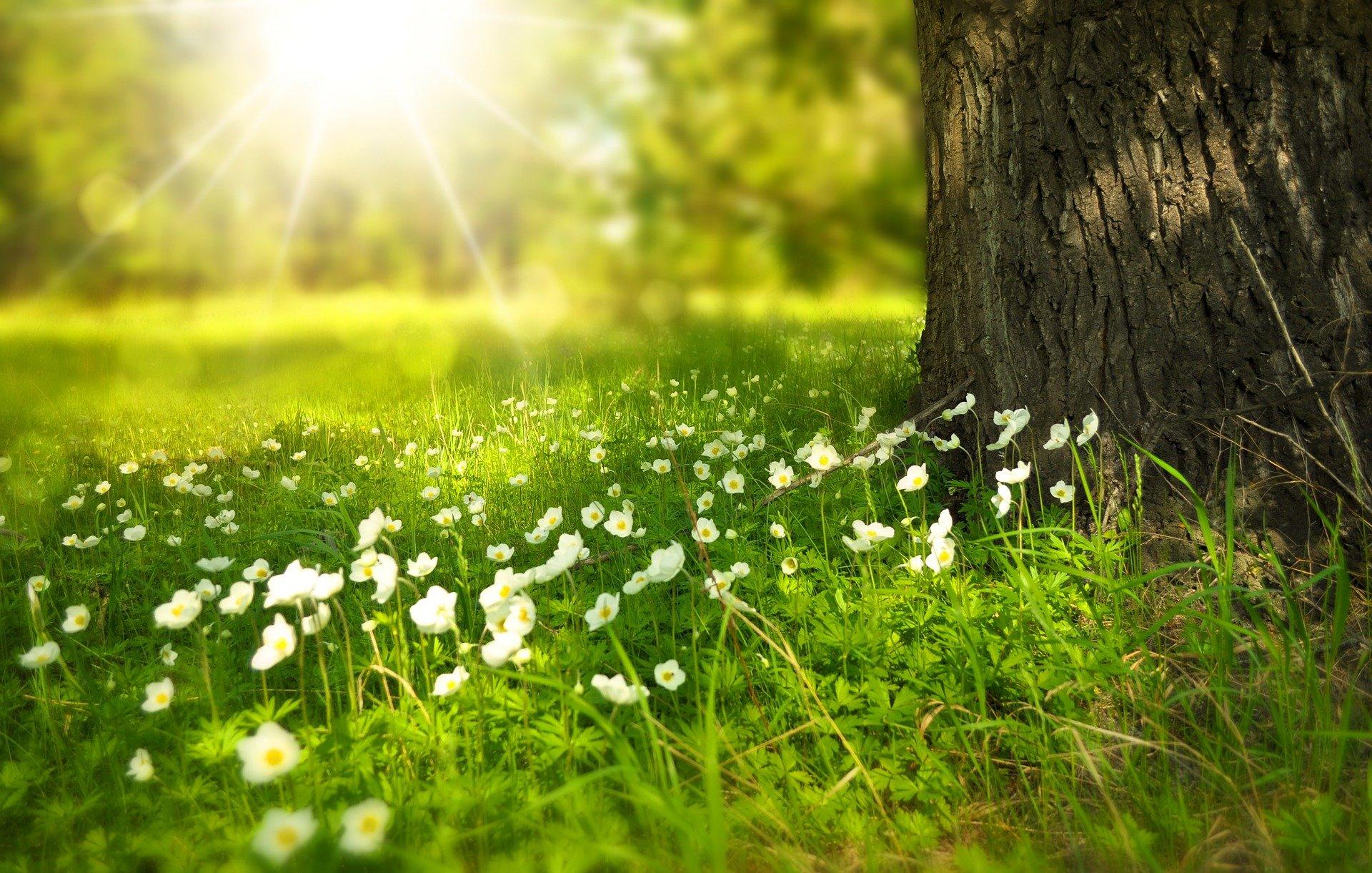 Boldogság és nyugalom